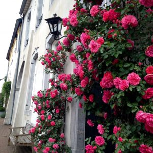 Entry with roses