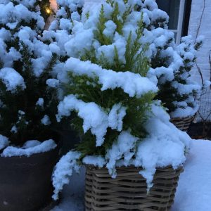 Winter at the-Cour
