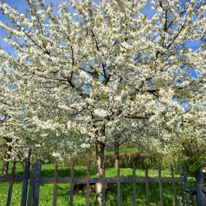 Blossom, 2 minutes walking from our house